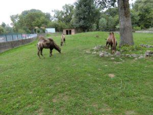 オシイェク 動物園